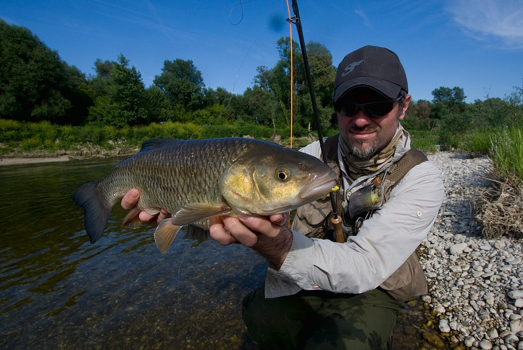 similarity-with-dry-fly-fishing-decent-chub-caught-with-fly-rod-and-imitation-that-is-pretty-similar-to-the-yellow-shimushi