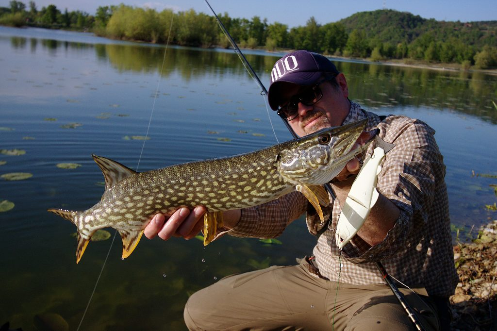No lure is too big for pike. Even smaller pike will attack big swimbait